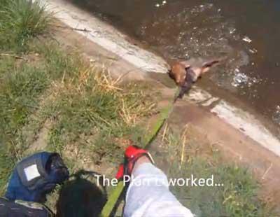 Моторист с BMW спасява малко теленце