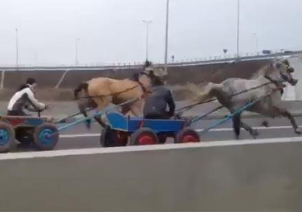 Гонка по магистралата… С каруци!
