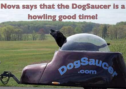 Някои кучета имат бензин в кръвта